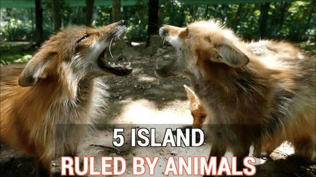 5-island-ruled-by-animals