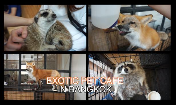 exotic-pet-cafe-in-bangkok