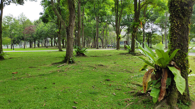 take-in-nature-at-the-all-new-lakeside-garden-in-jurong
